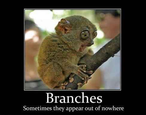 Branches of quant